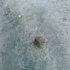 Stink bugs can be an eyesore and a constant assault against your sense of smell. They can cause mild damage to your garden but become an especially aggravating nuisance once inside your home. Chemical insecticides can come with a range of...