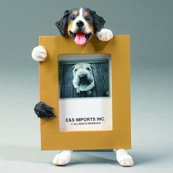 adorable bernese mountain dog picture frame makes a by petasauraus