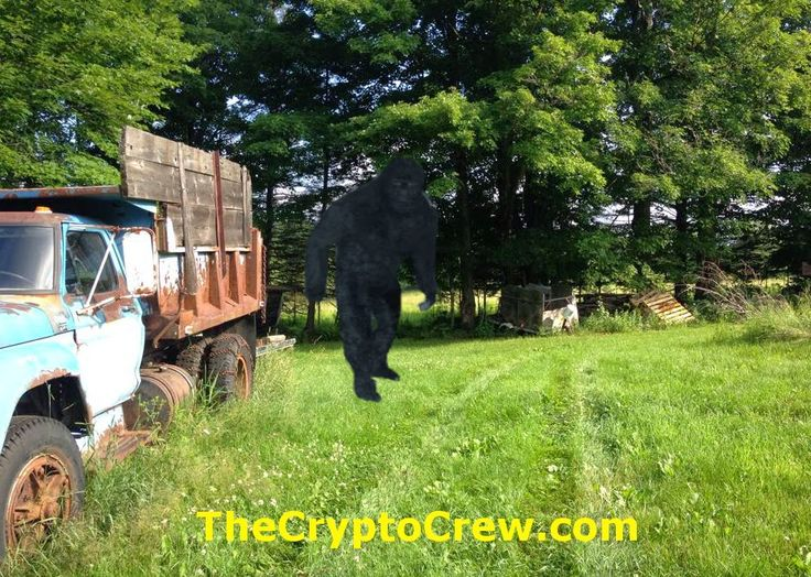 Bigfoot in New Hampshire - New Bigfoot Sighting from NH. Read All about it!  http://www.thecryptocrew.com/2014/07/new-bigfoot-sighting-report-from-new.html
