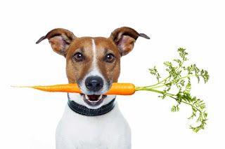 Jak karmić psa? | How to feed your dog?