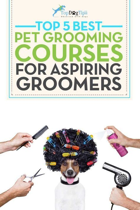 13813 best dog grooming images on pinterest wedding bride bridal best dog grooming courses online do you groom your own dogs or find yourself pulling out the scissors after your dogs trip to the grooming salon to get solutioingenieria Gallery