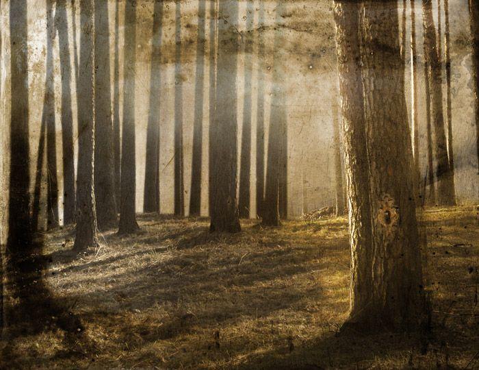 Päivi Hintsanen: Locked Forest, 2009