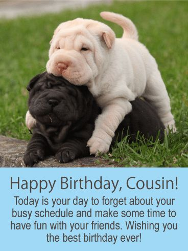 Have Fun Today! Happy Birthday Card for Cousin: Puppies represent all that is fun! They spend hours playing and don't have a care in the world. If this is what you wish for your cousin on his or her birthday, then get these fun loving puppies over to your cousin on this very special day! This birthday card will remind your cousin to just forget about their busy schedule so they can make time to have some birthday fun with their friends.