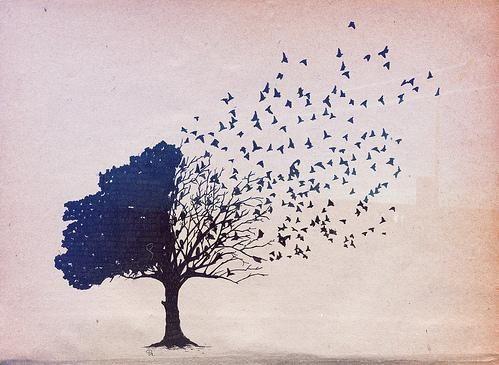 illustration arbre et oiseaux