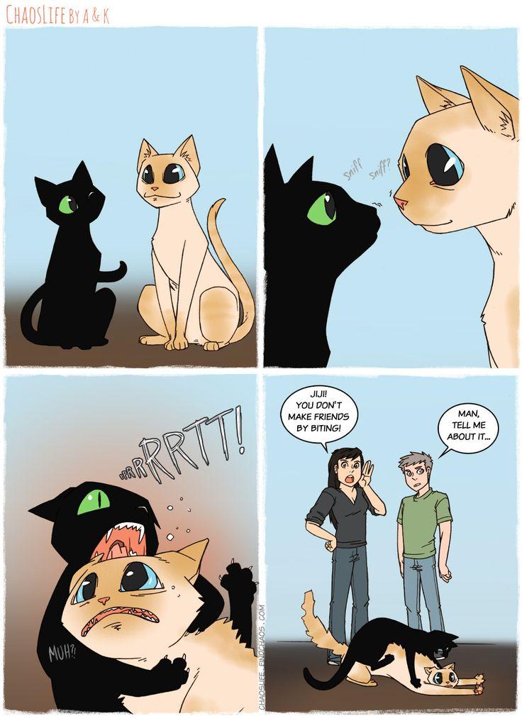 публике картинки с котенком из комиксов будет