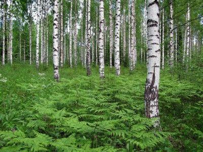 夏はハイキング、冬はクロカン、ベリー摘みにキノコ狩り、森での散策...。