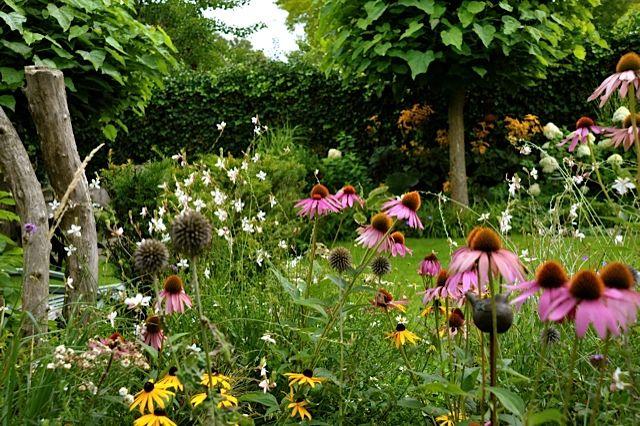 Stukje paradijs voor vlinders, bijen en mussen