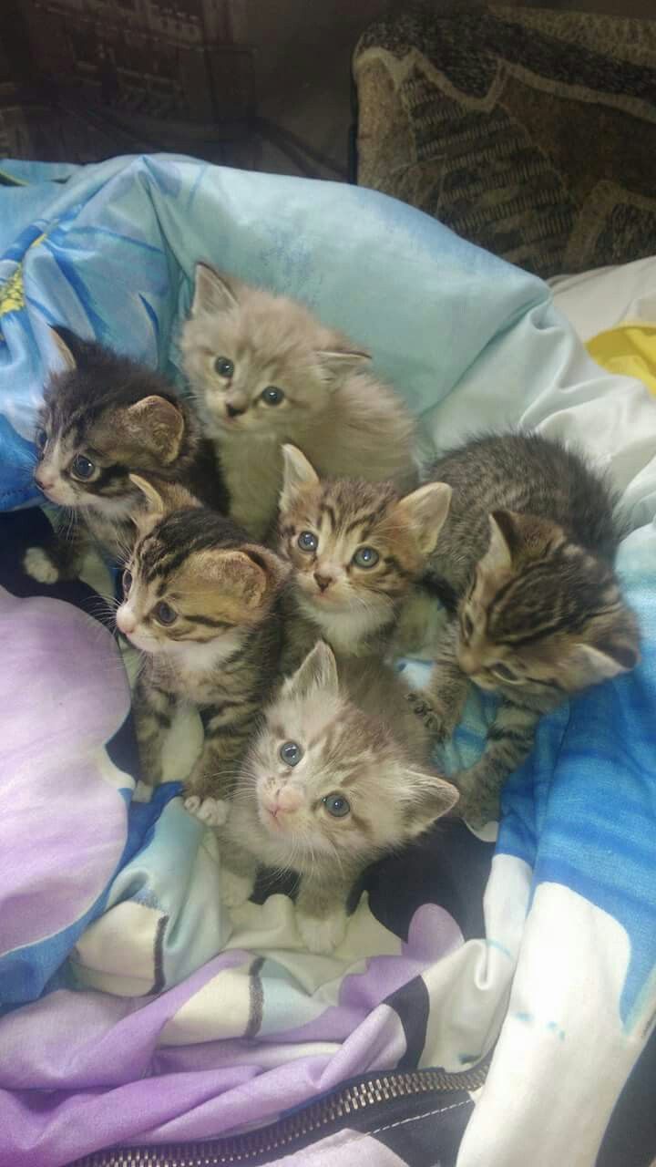 The Curious Crew Kittens Cutest Cute Cats Baby Animals