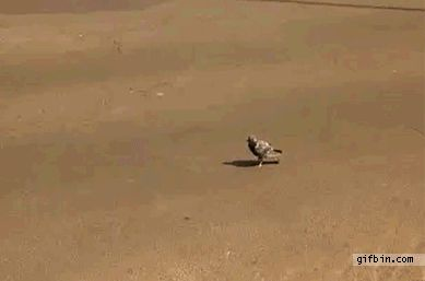 A pigeon that doesn't give a fuck: | 21 Things You've Never Seen Before In Your Life