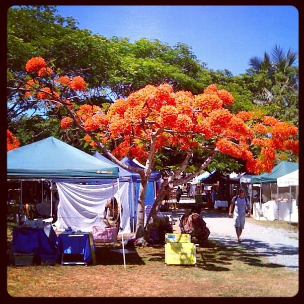 Port Douglas (Australia) Sunday Market