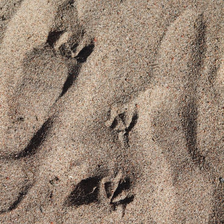 Sand // Footprints // Beach // Summer  Photo: Pala saaristoa