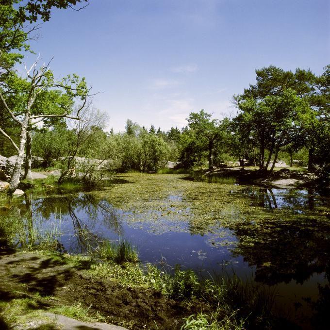 Mare forestière en forêt domaniale de Fontainebleau (Seine-et-Marne)