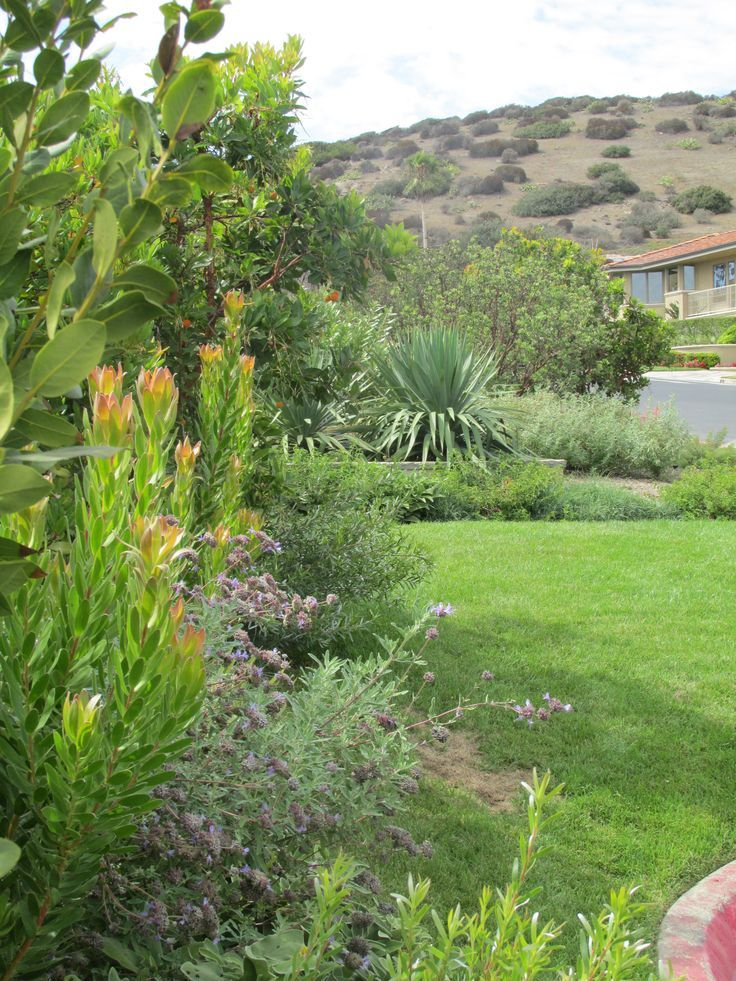 Amazing Create A Drought Friendly Landscape. (Originally Featured On A California Friendly  Landscape · Water WiseOrange CountyDrought ...