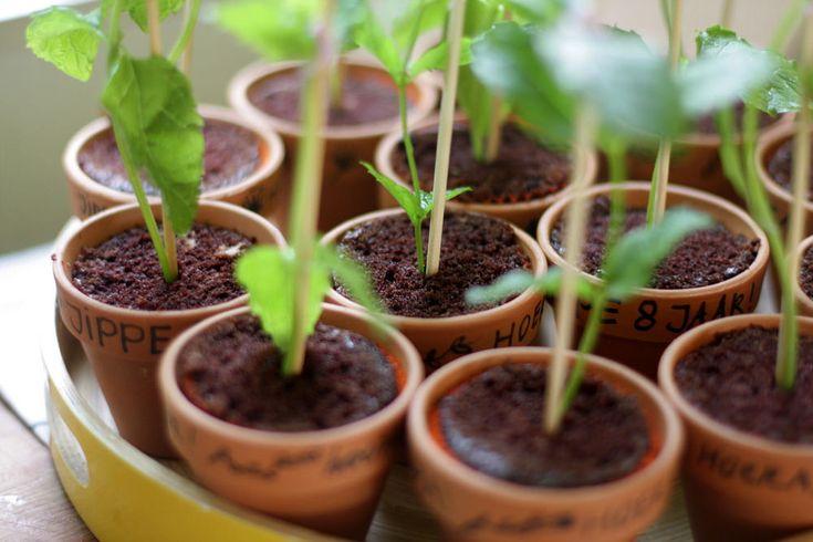 Geinig: muffin met munt; gezonde traktatie die er uitziet als een plantje met aarde....