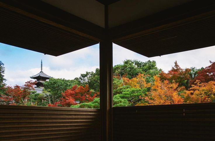 . . 京都に行きたい . . #kyoto #京都 #紅葉 #秋 #ファインダー越しの私の世界 #autumn #landscape #landscapephotography #tokyocameraclub #team_jp_ #daily_photo_jpn #bestjapanpics #reco_ig #pics_jp #phos_japan #indies_gram #indy_photolife #art_of_japan_  #impression_shots #vivid_impact #hypedgrams #resourcemag #jp_gallery #写真好きな人と繋がりたい #風景 #sonyalpha #sonyimages #vsco #sonyworldclub #japan