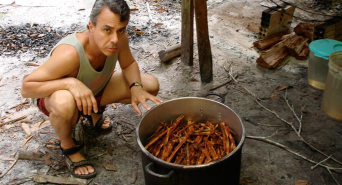 Scientist Believes Psychedelic Plant Medicine Ayahuasca Can Cure Cancer