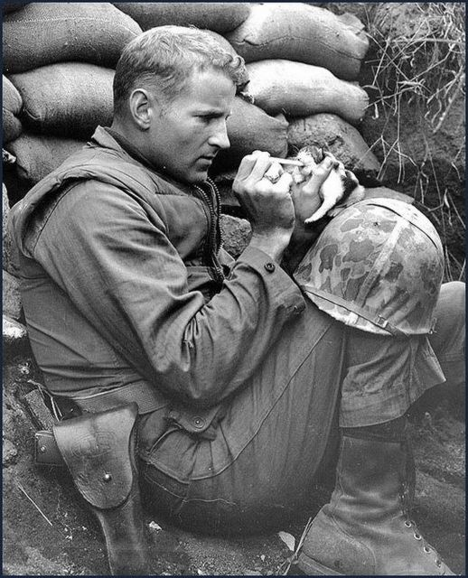 so cute!: Us Marines, Cat, Soldiers, A Real Man, Kittens, Frank Praytor, Korean War, Photo, Animal
