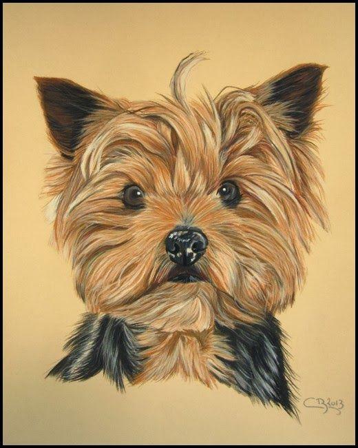 Blog du peintre animalier Cindy Barillet : Portraits d'animaux: Portrait de Yorkshire (pastels secs)