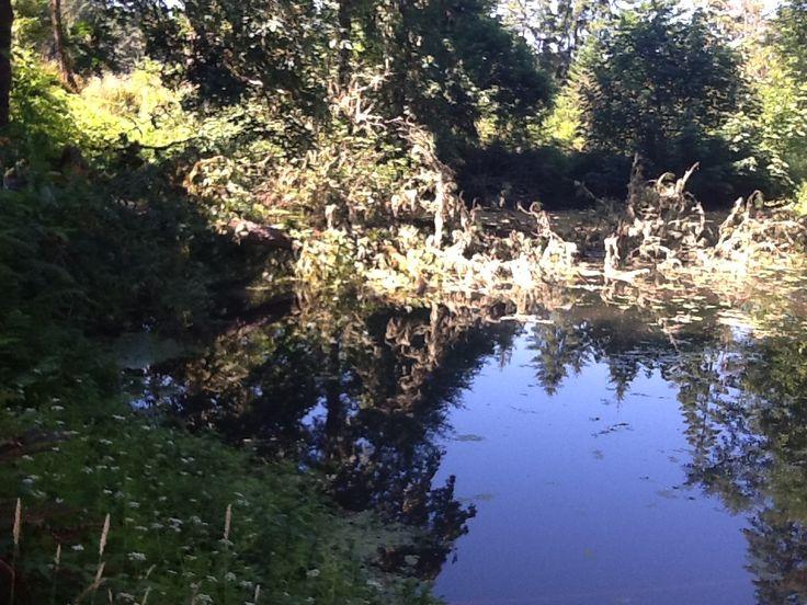 Oops, tree in pond