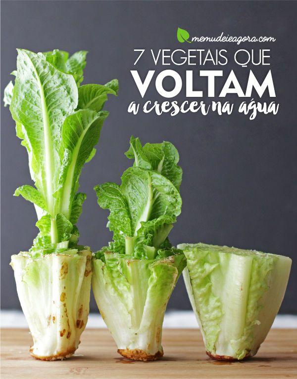 Me Mudei, e agora!? | Vegetais que Voltam a Crescer na Água