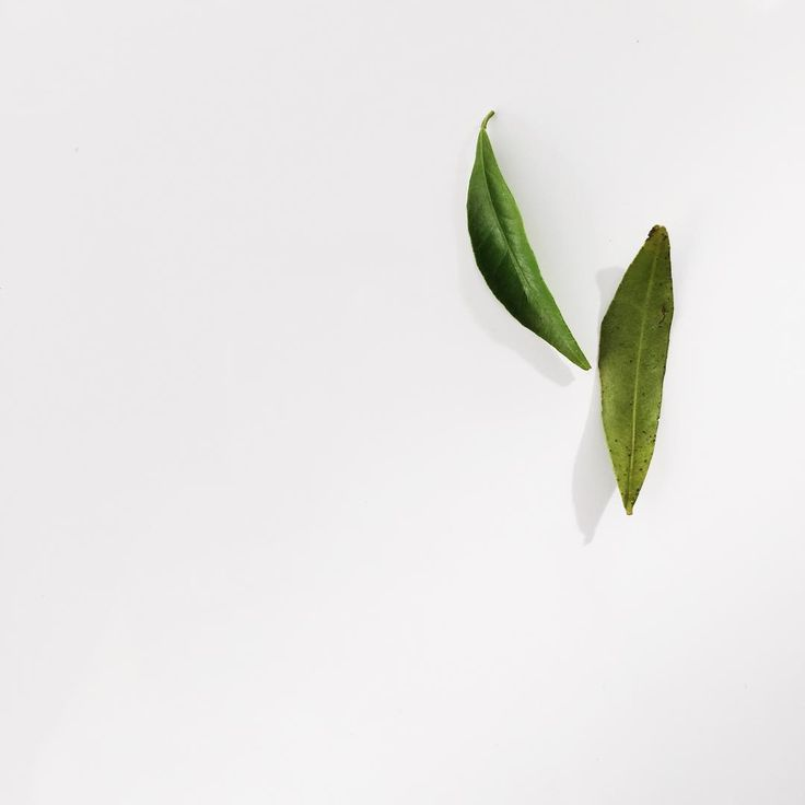 Just leaves  // #minimalism via @leysaflores
