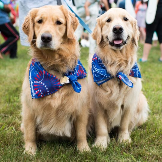 7506 best I love golden retrievers