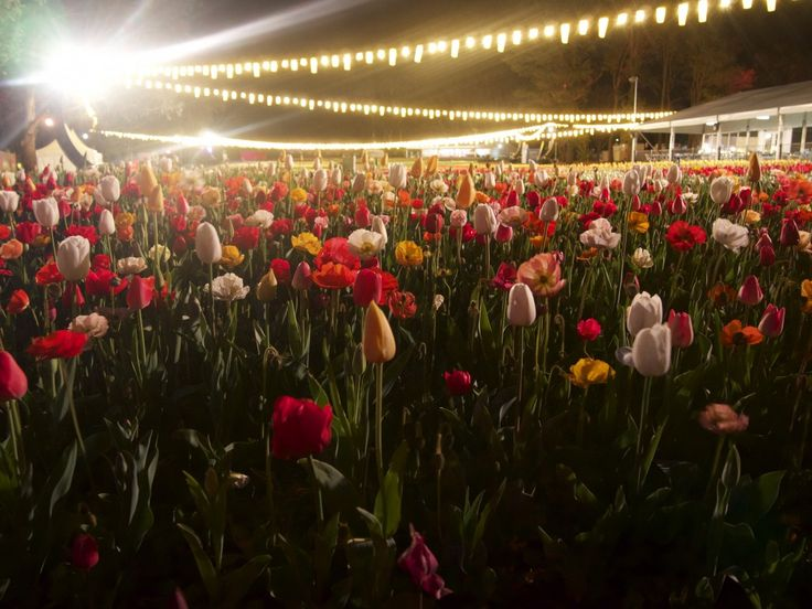 Snapfest at Nightfest | So Frank  Nightfest is when the garden beds of Floriade…
