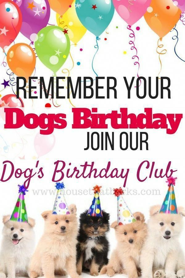 How To Draw Cute Japanese Animals Birthday Club Your Dog