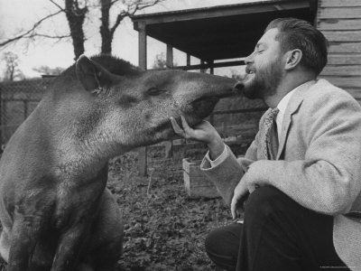 Gerald  Durrell and his tapir in his private zoo