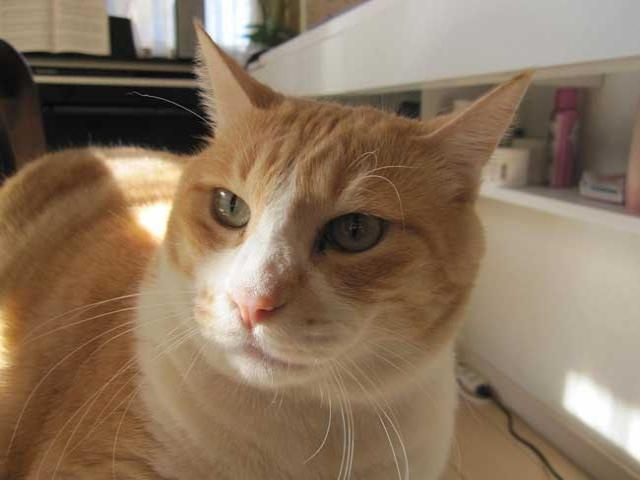 なんか黄昏てて凛々しい表情をしていました(^^)  遠い目をして何をお考えになっているのでしょう。気になります。  #cat  #ねこ  #猫