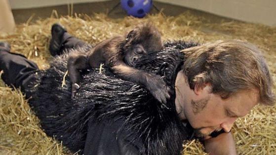 Zoo: Affenbaby mit gefellschtem Papa