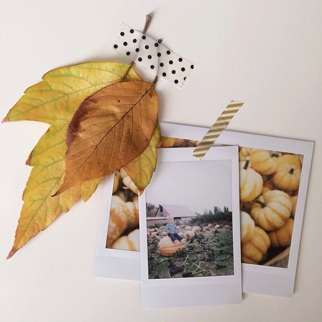 pieces of fall brought back from utah. | lisa rupp