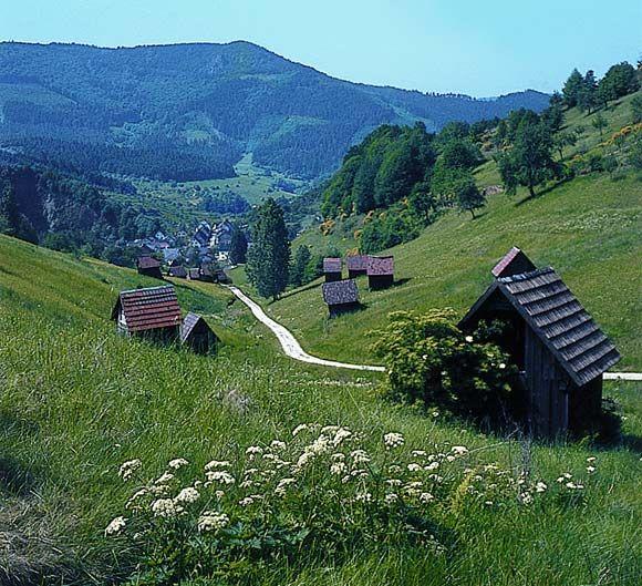 Schwarzwald (Black Forest)