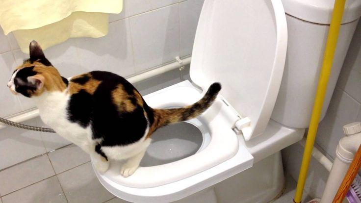 Kitty Toilet Trainer - #1 Solution for Toilet Training!