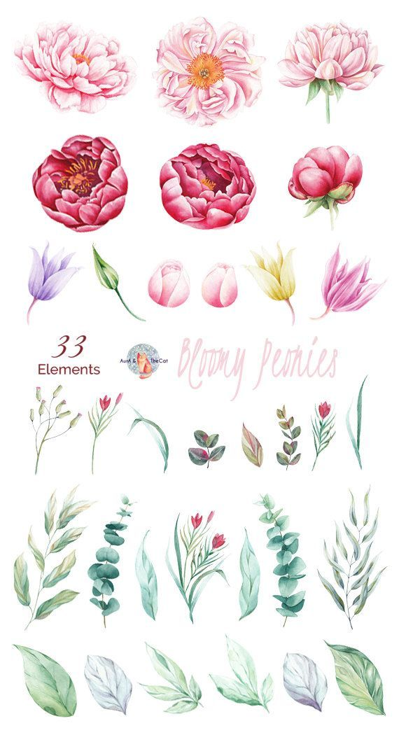 Watercolor Bloomy Peonies Elements Flowers Hand Painted, Floral, Peonies, Weddin… – Blumen