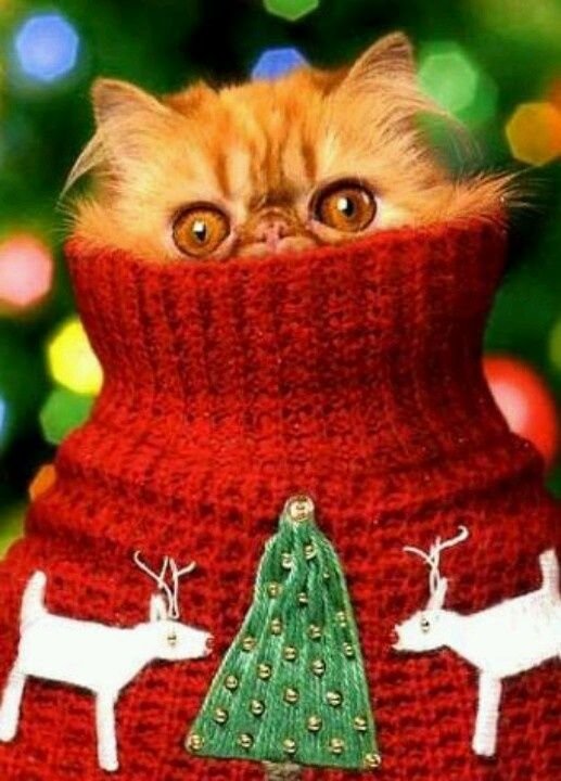177 best Christmas apparel images on Pinterest | Sweatshirts ...