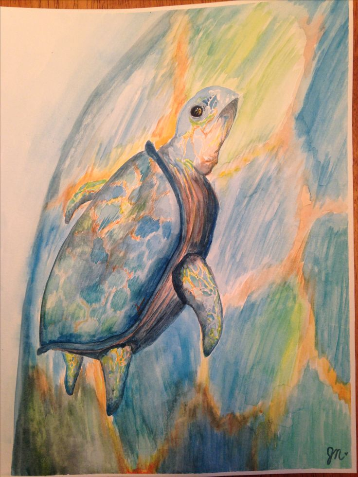 Turtle. No reference. Watercolour