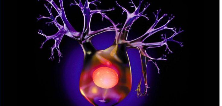 Cerveau : 6 règles d'or pour continuer à fabriquer des neurones