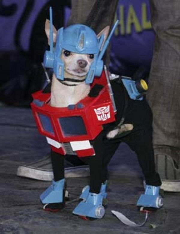 Funny dog in costume transformer | Funny pictures