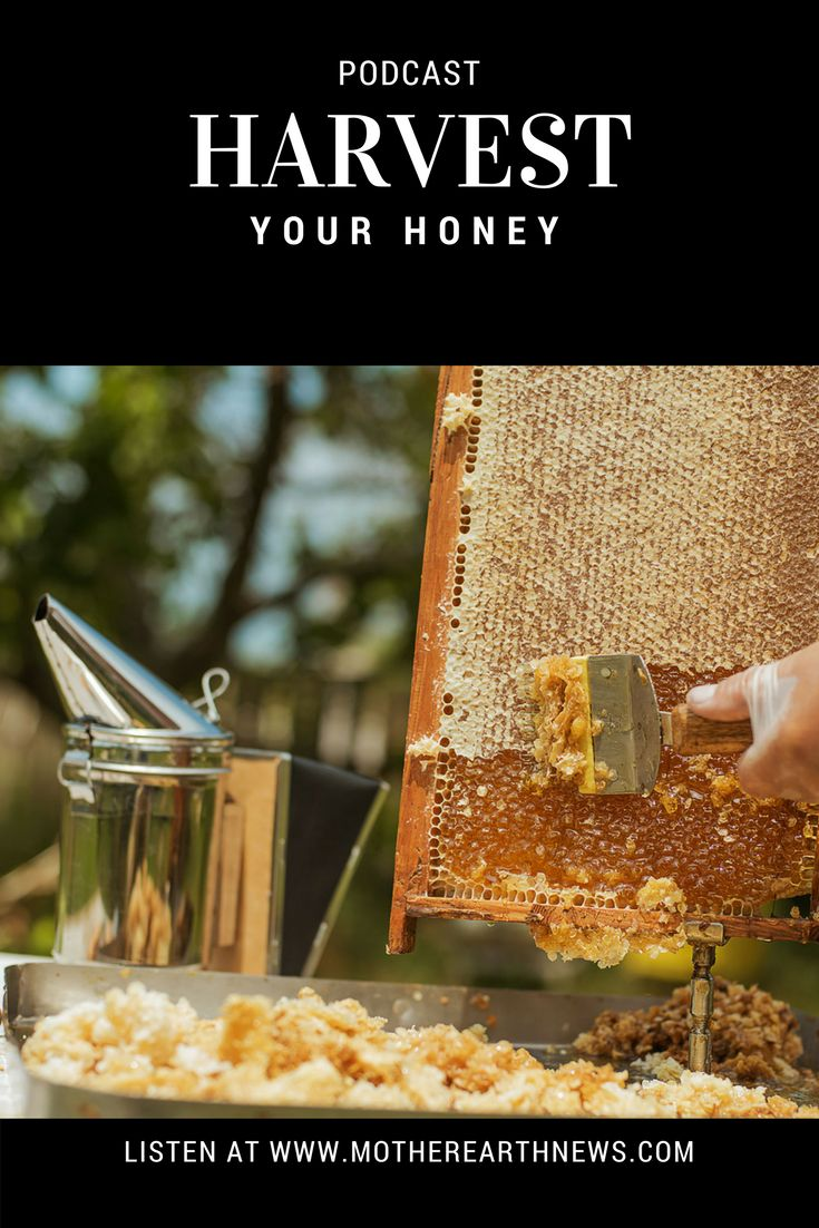 How to make a moisture quilt for a langstroth hive honey - Learn How To Properly Harvest Honey From A Langstroth Hive Podcast