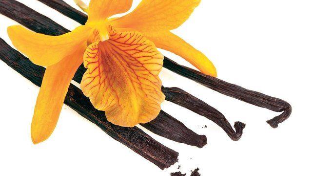 1930920 vanilka vanilkove struky