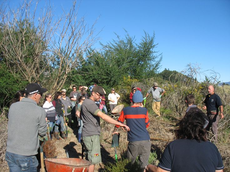 team healthpost. acting sustainably. planting trees. a whole 1000 of them. motupipi spit, golden bay. july 2013 #sustainability