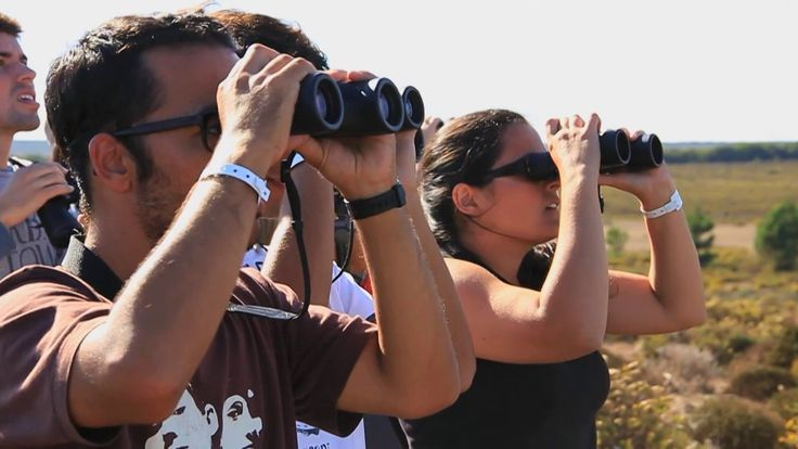 Sagres Birdwatching Festival on Vimeo from Paulo Margalho. August - November. Sagres, in the Algarve, is the place to see various birds migrating to Africa