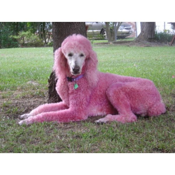 52 Best Costumes This Dog S Life Images On Pinterest