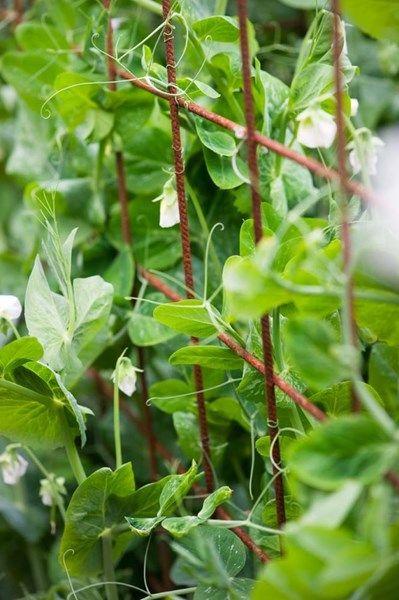 Odla grönsaker – Alla kan lyckas!