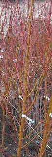 Metszés: Gyümölcsfák ültetése