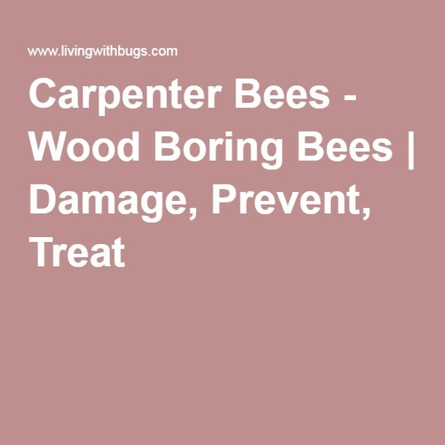 Carpenter Bees - Wood Boring Bees | Damage, Prevent, Treat