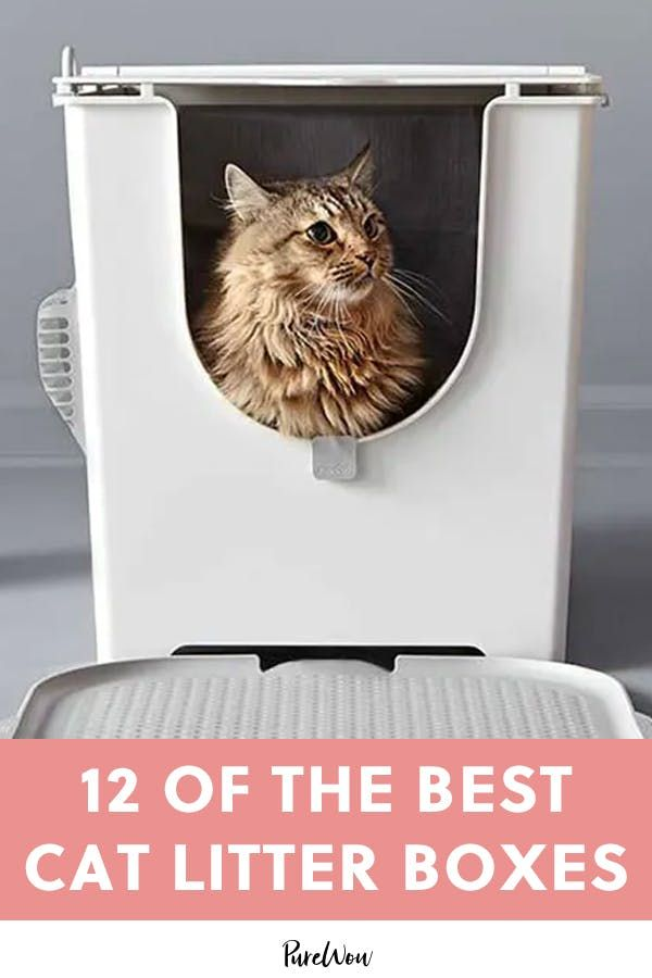 12 Of The Best Cat Litter Boxes With Images Best Cat Litter Cat Litter Box Litter Box