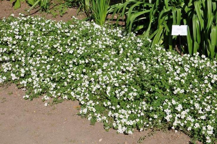 Oltre 1000 idee su piante da ombra su pinterest giardino for Piante da giardino mezz ombra