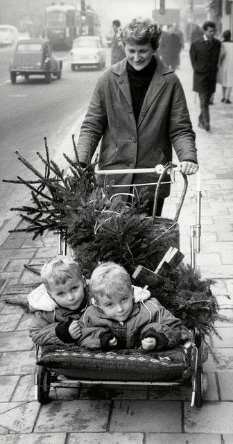 A woman with twins and a Christmas tree in a stroller. Amsterdam, December 11, 1964